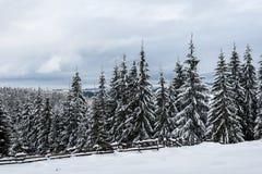 Ландшафт зимы с снегом на деревьях стоковые изображения