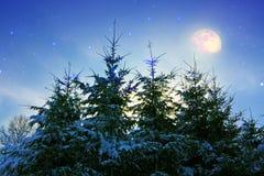Ландшафт зимы с снегом покрыл ели и луну Стоковые Изображения RF