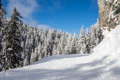 Ландшафт зимы с снежным лесом высоким в горах в солнечном дне стоковые фотографии rf