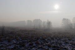 Ландшафт зимы, туманное холодное утро стоковая фотография