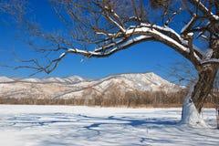 Ландшафт зимы стоковое фото rf
