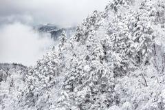 Ландшафт зимы froest стоковые фото