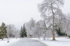 Ландшафт зимы Snowy после пурги стоковая фотография