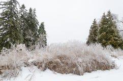 Ландшафт зимы Snowy после пурги стоковое изображение rf
