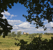 ландшафт изолированный фермой tuscan стоковые фото