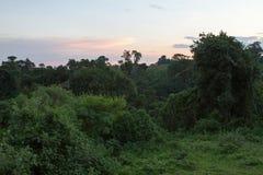 Ландшафт и живая природа зоны консервации Ngorongoro Стоковые Фото
