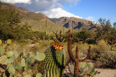 Ландшафт каньона Sabino Стоковая Фотография RF