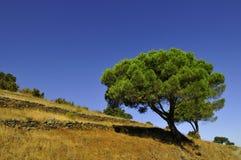ландшафт Каталонии Стоковые Изображения