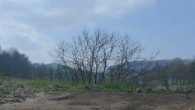 Ландшафт, который сгорели дерева без листьев видеоматериал