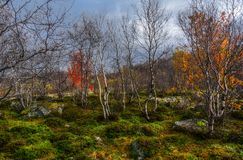 Ландшафт красивой осени северный с деревьями Стоковое фото RF