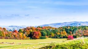 Ландшафт красочных деревьев Wernigerode в падении стоковое изображение rf