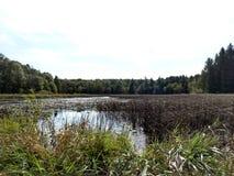 Ландшафт крыла вороны Минесоты стоковое фото rf