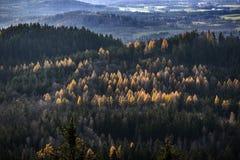 Ландшафт леса горы осени Гигантские горы, Польша Стоковая Фотография RF