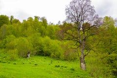 Ландшафт леса горы Стоковое Изображение