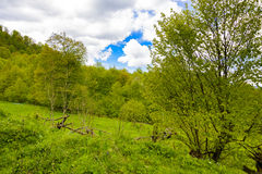 Ландшафт леса горы Стоковые Изображения