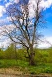 Ландшафт леса горы Стоковое Фото