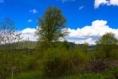 Ландшафт леса горы Стоковые Фото