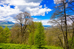Ландшафт леса горы Стоковое Изображение RF