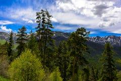 Ландшафт леса горы Стоковая Фотография RF