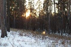 Ландшафт леса зимы стоковое изображение rf