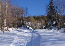 Ландшафт леса зимы с следом лыжи '†в снеге Стоковая Фотография RF