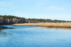 Ландшафт леса и реки стоковые фотографии rf
