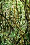 Ландшафт леса лавра против предпосылки голубые облака field wispy неба природы зеленого цвета травы белое Стоковое Фото