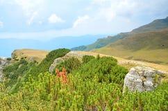 Ландшафт лета в горах стоковые изображения rf