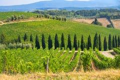 Ландшафт лета в зоне Тоскане Chianti Стоковые Изображения
