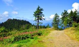 Ландшафт лета в лесе национального парка баварском, Германии Стоковые Изображения