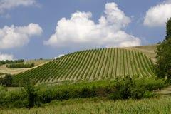 Ландшафт лета в Romagna Италии Стоковые Фото