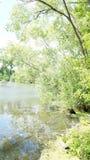 Ландшафт лета, деревья на береге пруда стоковое фото