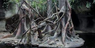 Ландшафт лета естественный в тропическом лесе Стоковое Изображение