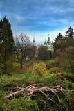 Ландшафт лета леса с большим старым tree& x27; корень s и православная церков церковь стоковое изображение