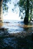 Ландшафт лета на солнечный день рекой стоковые изображения rf