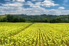 Ландшафт лета около Volterra, Тосканы Стоковые Изображения RF