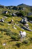 Ландшафт лета пейзажа, гора Pirin, Болгария стоковые изображения