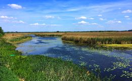 Ландшафт лета, поля реки и луга, Польша стоковое фото