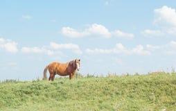Ландшафт лета сельский с пасти коричневую лошадь на луге Стоковые Изображения RF