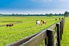 Ландшафт лета страны. стоковые изображения rf