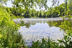 Ландшафт лета с озером и пущей стоковые фото
