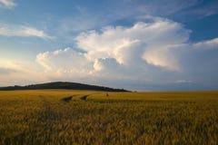 Ландшафт лета с пшеничным полем и бурными облаками Стоковая Фотография