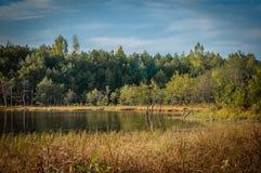 ландшафт Лет-осени побережье небольшого озера с creeper, кустами и coniferous лесом под голубым небом Стоковое Изображение RF