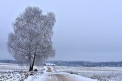 Ландшафт Литвы сельское место Стоковое Изображение