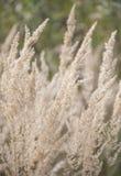 Ландшафт луга лета цветка травы Стоковая Фотография RF