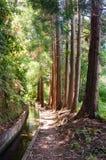 Ландшафт Мадейры с секвойями и levada Стоковые Фото