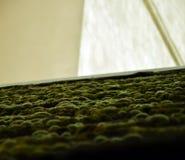 Ландшафт мха крыши в› Å™ice LitomÄ стоковое изображение rf