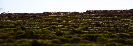Ландшафт мха крыши в› Å™ice LitomÄ стоковые фото