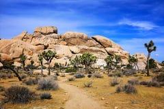 Ландшафт национального парка дерева Иешуа, Калифорния стоковые изображения
