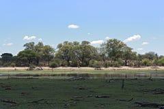 Ландшафт на реке Boteti, национальном парке Makgadikgadi, Ботсване стоковая фотография rf